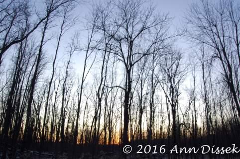 naked-trees