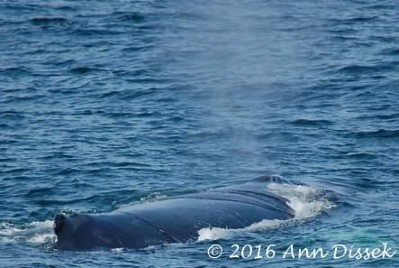 whalebreathe1